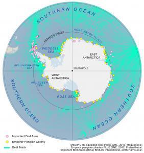 Antarctica Animals Map