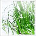 Water Vegetation