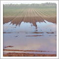 Agriculture Flooding