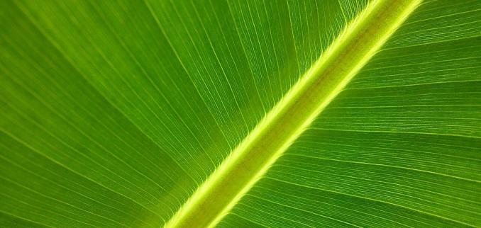 Vegetation NDVI