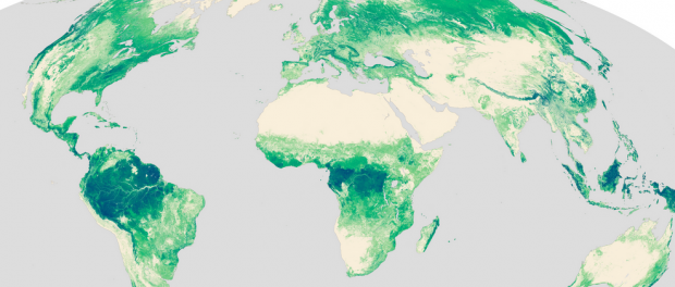 4 global forest maps to see the forest for the trees gis geography 1 nasas forest heights map gumiabroncs Gallery