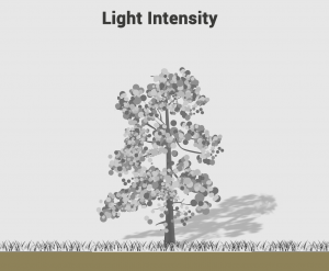 Light Intensity