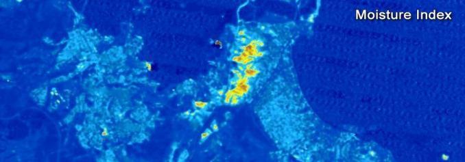 Landsat Moisture Index