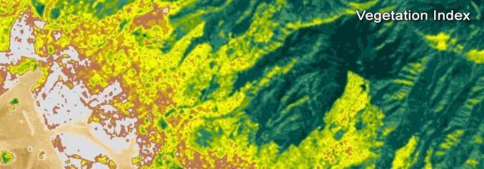 Landsat Vegetation Index